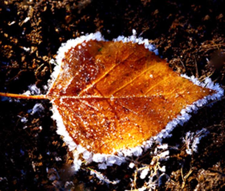 В Воронеже на неделе теплая и дождливая погода сменится заморозками