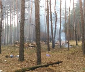 Очевидцы: В Воронеже несколько дней подряд рубят и жгут деревья лесного фонда