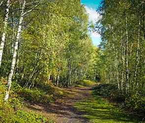 В Воронеже представят новый проект зеленого пояса, втрое увеличив его территорию