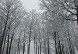 Синоптики обещают воронежцам снегопад