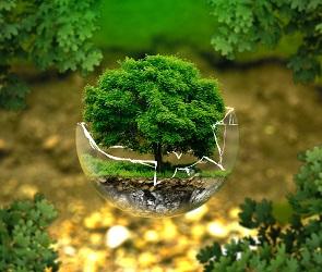 Год экологии в регионе: очистка рек, субботники и увеличение популяции оленей