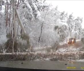 Автомобилист чудом спасся во время падения сосны на дорогу в Воронеже
