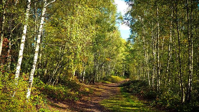 Воронежские власти вновь отправили на доработку проект создания «зеленого пояса»