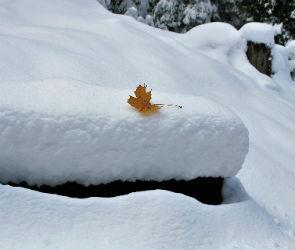 Снег будет идти в Воронеже все выходные