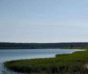 Воронежцы проголосовали за придание озеру «Круглое» особого статуса