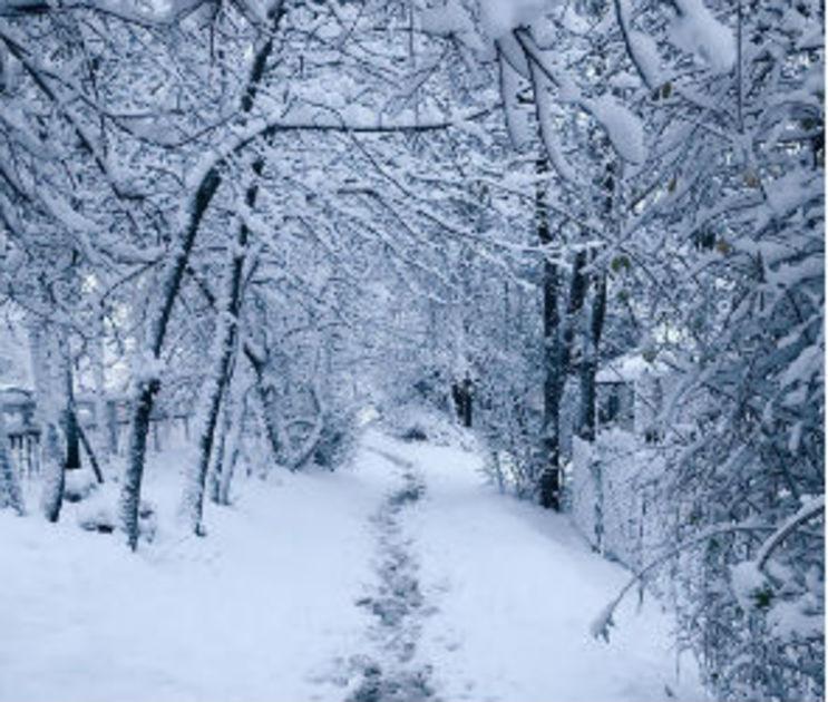 Синоптики обещают воронежцам пасмурную погоду, снег и гололед