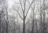 Первые выходные зимы в Воронеже будут неожиданно теплыми и дождливыми