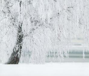 Воронежцам обещают снег и похолодание