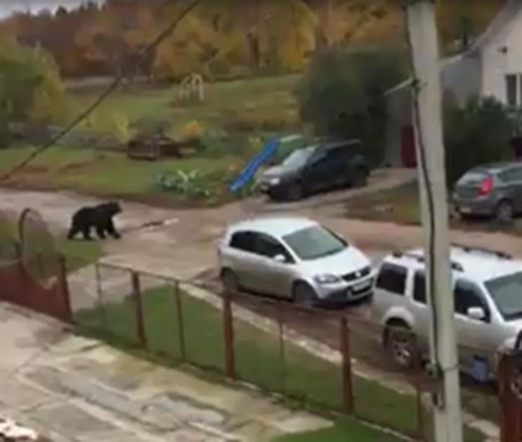 Хозяина медведя, убившего пенсионера под Воронежем, могут осудить на 6 лет