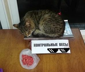 В воронежском магазине кота взвесили вместо фарша