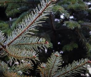 Мэрия Воронежа накажет за нарушения в организации елочных базаров