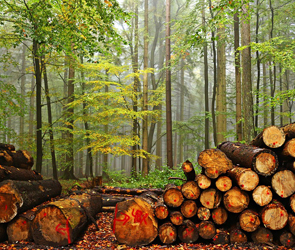 За уничтожение 400 деревьев в парке мэр воронежского поселка заплатит 150 000