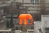Воронежцев насмешил гигантский оранжевый слон в центре города