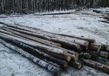 Воронежцы просят остановить рубку леса в Отрожке под новый жилой квартал