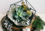 Универсальный подарок найден: флорариумы МAGIC GARDEN