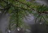 Воронежцам обещают очередные теплые и дождливые выходные