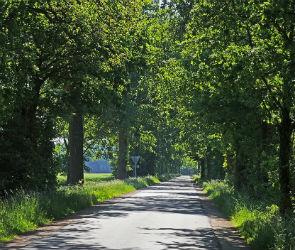 Стало известно, когда в Воронеже построят дорогу через Нагорную дубраву
