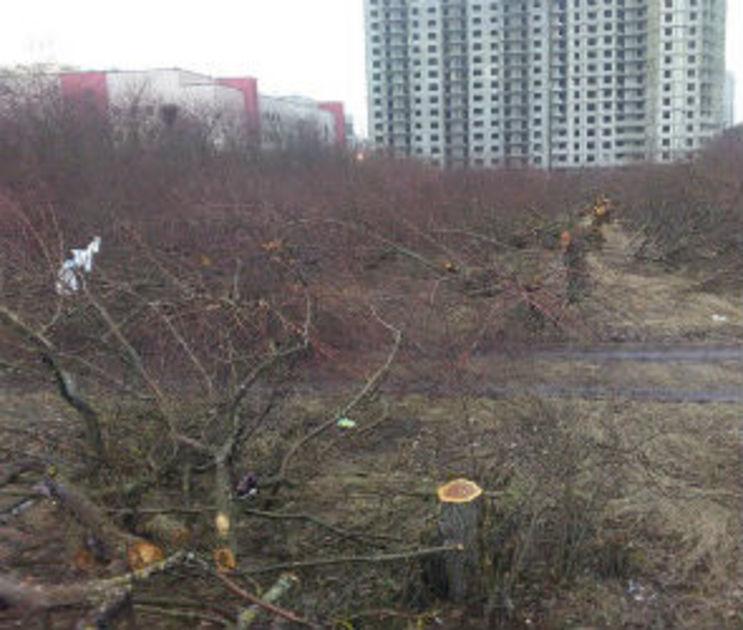 «Выбор» заявил, что покупал яблоневый сад для сельхоздеятельности