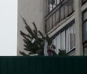В Воронеже на крышу «Пятью Пять» с балкона сбросили наряженную елку