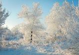 Зима вернулась: воронежцам обещают снег и похолодание