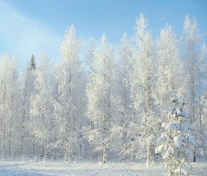 Мороз и солнце ожидаются в Воронеже на выходных