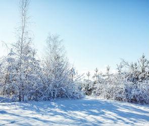 Воронежцам обещают морозную и снежную неделю