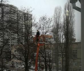 В Воронеже спасение привязанного к дереву грача сняли на видео
