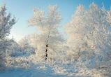Воронежцев ждет холодная и снежная неделя