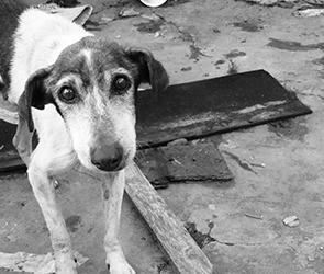 В Воронеже из-за жалоб горожан вновь отлавливают бездомных собак