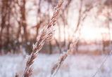 Воронежцев ждут 15-градусные морозы и снег