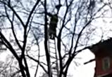 Появилось видео спасения кота, застрявшего на верхушке дерева в Воронеже