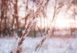 Синоптики: Сретенские морозы покидают Воронеж