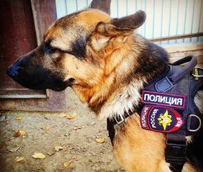 В Воронеже спецслужбы искали взрывное устройство в доме на улице Комарова
