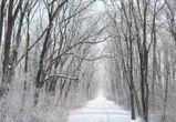 В Воронеже на рабочей неделе похолодает до -17°C