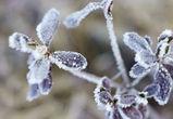 В праздники воронежцев ждут двадцатиградусные морозы