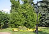 В Воронеже посадят 4 тысячи деревьев и разобьют сквер имени Романа Филипова