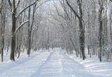 В Воронеж постепенно придет потепление