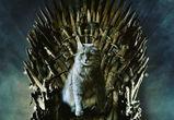 Кошку Лизу из воронежского вуза назвали Матерью котов и посадили на трон