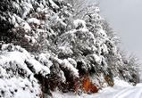 В ближайшие дни воронежцев ожидают морозы и периодические снегопады