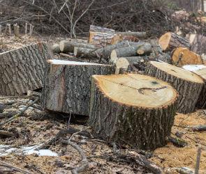 Воронежец незаконно спилил 78 деревьев  стоимостью 3 миллиона рублей
