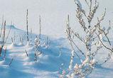 18-градусные морозы и снег ожидают воронежцев