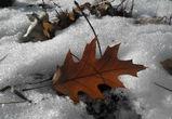 В ближайшие выходные в Воронеже заметно потеплеет