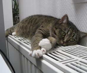В Воронеже из-за коммунальной аварии 38 домов остались без тепла и горячей воды