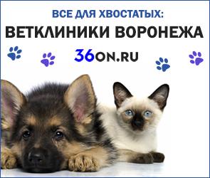 С заботой о хвостатых: ветеринарные клиники Воронежа