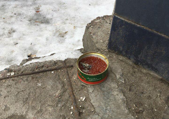 Воронежцев шокировала красная икра, которой кормят бродячих кошек