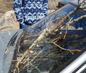 На Ленинском проспекте коммунальщики, обрезая деревья, разбили авто на парковке