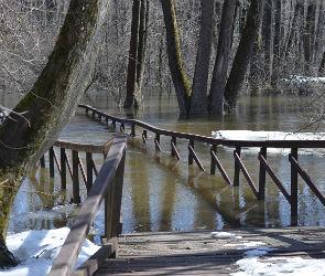 Из-за небывалого паводка закрыли экологические тропы в Воронежском заповеднике