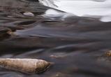 На юге Воронежской области пенсионер утонул в глубокой луже