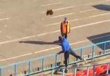 На футбольном матче в Воронеже в тренера бросили живого петуха