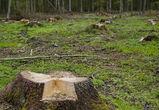 Житель Воронежской области, спиливший 78 деревьев, выплатит 3 миллиона рублей